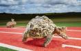 爬行速度最快的乌龟