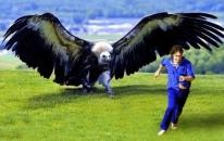 世界上体型最大的鹰,落地2米高,展翅7米长,现在已经看不到了