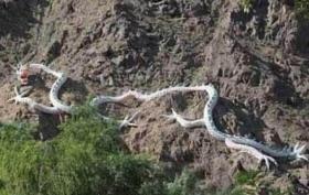 山东真实的蛇化龙的事真相揭秘:蛇化龙事件是真的吗?